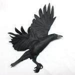 3-Crow1-1000x1000