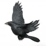3-Crow3-1000x1000
