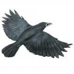 3-Crow4-1000x1000