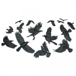 3-Crow5-1000x1000